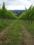 De wijngaarden van Chianti