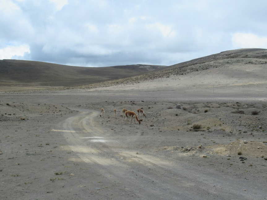 Ecuador parte 2: NaturaPura